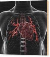 Pulmonary Arteries Wood Print
