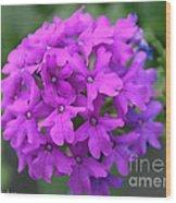 Purely Purple Wood Print