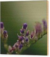 Purple Bud Wood Print