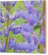 Purple Lupine Flowers Wood Print