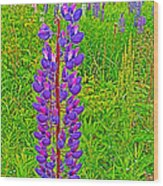Purple Lupine On Campobello Island-nb Wood Print