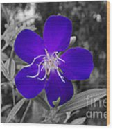 Purple Passion Wood Print by Joe McCormack Jr
