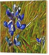 Pygmy-leaved Lupine In Antelope Valley Poppy Preserve-california Wood Print