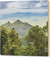 Queensland Rainforest Wood Print