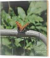 Question Mark Butterfly Wood Print