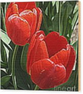Radiant In Red - Tulips Wood Print