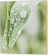 Raindrops On Grass Wood Print