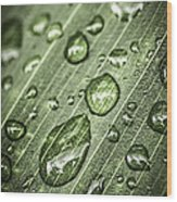 Raindrops On Green Leaf Wood Print by Elena Elisseeva
