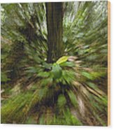 Rainforest Andes Mountains Ecuador Wood Print