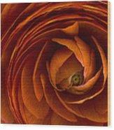 Ranunculus Wood Print by Cindy Rubin