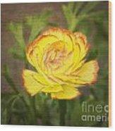 Ranunculus Wood Print