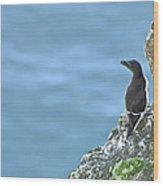 Razorbill Iceland Wood Print by Sigurdur Aegisson