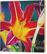 Red And Yellow Lily Wood Print