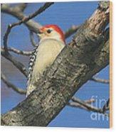 Red-bellied Woodpecker Wood Print
