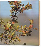 Red Berries Wood Print