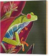 Red Eyed Tree Frog 2 Wood Print