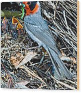 Red-faced Warbler At Nest With Young Wood Print