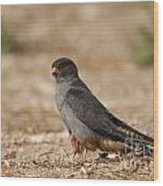 Red Footed Falcon Falco Vespertinus Wood Print