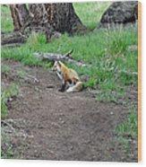 Red Fox In Yellowstone Wood Print