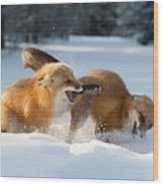 Red Foxes Interacting In Snow Wood Print