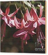 Red Fuchsia Wood Print