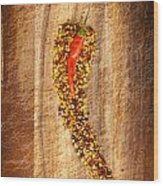 Red Hot Chilli Concept Wood Print