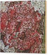Red Lichen  Wood Print