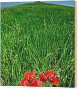 Red Poppies And Oak Wood Print