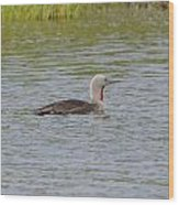 Red-throated Loon Wood Print