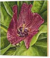 Red Tropical Tree Flower Wood Print