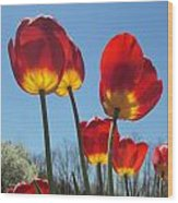 Red Tulips With Blue Sky Background Wood Print