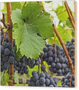 Red Wine Vineyard 3 Wood Print