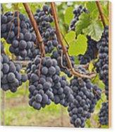 Red Wine Vineyard 4 Wood Print