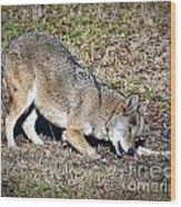 Red Wolf Wood Print