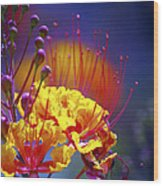 Red Yellow Blossoms 10197 Wood Print