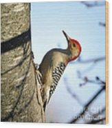 Redbelly Woodpecker Wood Print