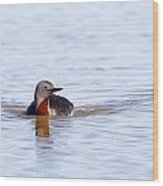 Redthroated Loon Wood Print