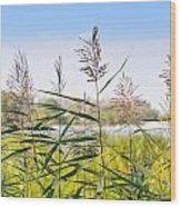Reed Flowers Wood Print
