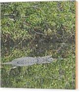 Resting Gator Wood Print