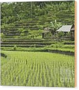 Rice Fields In Bali Indonesia Wood Print