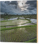 Rice Terraces In Central Bali Indonesia Wood Print