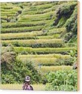 Rice Terraces Wood Print