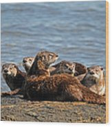River Otter Family Wood Print