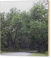 Road In The Woods Wood Print