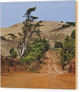 Road On Hierro Wood Print