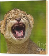 Roaring Practice Wood Print by Ashley Vincent