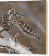 Robber Fly And Prey Wood Print