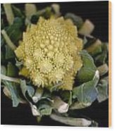 Romanesco - Italian Broccoli Wood Print