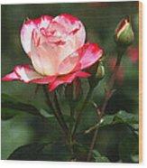Rose And Bud At Mcc Wood Print