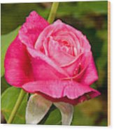 Rose Flower Wood Print